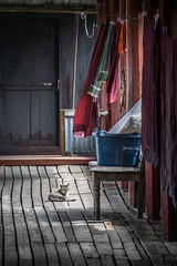 Lonely cat (Channed) Tags: asia azi birma burma inlaylake inlelake myanmar shan myanmarbirma monastery klooster cat kat channedimages chantalnederstigt