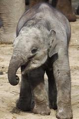 Olifanten - Emmen (K.Verhulst) Tags: elephants olifant emmen noorderdierenpark olifanten dierentuinemmen aziatischeolifant asiaticelephants