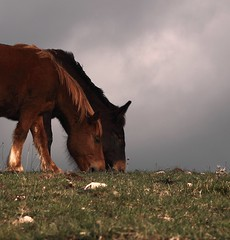 Sincro, duo libero. (da.geli) Tags: two sky horses italy brown green grey freedom free umbria impressedbeauty mygearandme mygearandmepremium parcodelmontesubasio sincroduolibero