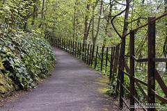 Railings (DMeadows) Tags: park city gardens scotland ramp path glasgow greenery botanic railings davidmeadows dmeadows davidameadows dameadows yahoo:yourpictures=yourbestphotoof2012