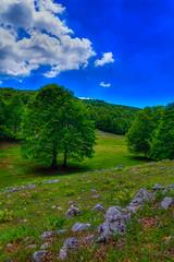 nature again...