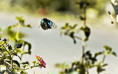 (ranjini.v) Tags: road green butterfly fly nikon gray oldphoto takeoff bg d60 ranjini heavilycropped
