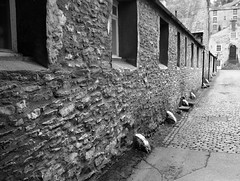 STONE COTTAGES (Davesuvz) Tags: old england bw black english stone blackwhite alley cottage backstreet cobble alleyway cobbles