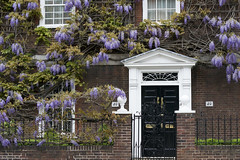 Overgrown House (Cris Ward) Tags: park door uk flowers plants house black color colour london classic nature digital garden 50mm prime petals spring colorful purple britain sony entrance vine doorway bloom flowering growing climber alpha f18 dslr amateur beginner fascia a450 50mmdtsam