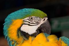 "Parrot (DirkVandeVelde ""on and off"") Tags: turkey sony parrot asie turkije loro marmaris azie papegaai dslta77"