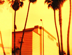 Sears (Jodie Dobson (Moving Country) is that busy?) Tags: california red urban orange film yellow analog palms la lomography santamonica palmtrees metropolis analogue redscale
