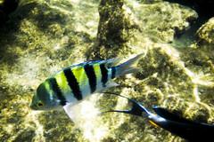 Marsa Alam - Turtle Bay (Alessandro Bertelli) Tags: turtle redsea snorkeling turtlebay marsaalam corallo carettacaretta fondale marrosso coralli fondali pescechirurgo tartarugamarina