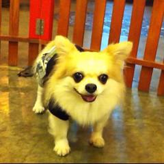 [คุณก้านกล้วย] คืนนี้ขอให้ทุกท่านมีความสุขมากๆ ราตรีสวัสดิ์ครับ | Sweet Dreams, Goodnight! - ธนาสุทธิ์ (Steve) #coffeepuppy #dogcafe #คาเฟ่หมา