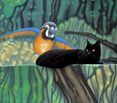 Dschungel-Mietze (cmdpirx) Tags: pet black bird wall cat germany graffiti mural paint hamburg parrot can spray katze aerosol haustier schwarz papagei vogel