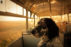 Riding the bus (Rich007) Tags: gettyimages getty