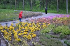 Laajasuo Rhododendron park (Pohjois-Haaga, Helsinki, 20120603) (RainoL) Tags: flowers summer plants plant flower june finland helsinki u rhododendron ericaceae helsingfors pohjoishaaga 2012 uusimaa nyland 201206 laajasuo 20120603