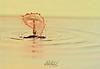 DSC_6603 (Adel Hilal عادل الهلال) Tags: السرعه تصوير قطرة قطرات فلاشات استديو فائق