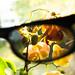 Genom mina solglasögon