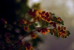Auch im Nebel sieht man Farben. - Even in fog you can see colours. (Manuela Salzinger) Tags: autumn leaves fog forest dawn nebel herbst wald bltter morgengrauen