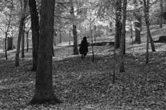 (Armin Schuhmann) Tags: 1978 nikkormat ft3 nikkor 135mmf28ai 135mm f28 ai 135mmf28 telephoto manual prime lens vintage old automn nikon nikony48medyellow y48 yellow kodak kodakplusx125 plusx plusx125 125asa monochrome monochrom filmphotography filmscan filmisnotdead focus believeinfilm argentique analogue analogic analog 35mm d7611 d76 selfdeveloped bw blackandwhite blackwhite sw schwarzweiss schwarzundweiss scan schwarzweis noiretblanc montreal quebec canada mount royal leaves foliage trees forest nature light automnn walk woods ishootfilm kodakplusx filmphoto shootfilm buyfilmnotmegapixels analogo pelicula пленка longlivefilm northeast vintagecamera vintagelens