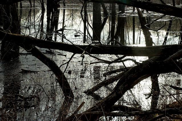 2015.04.12_middlefork-marshes_002_crop2