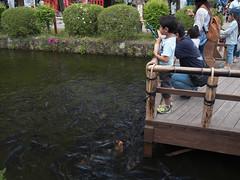 P1560211.jpg (Rambalac) Tags: water japan pond asia вода пруд tochigiken nikkōshi япония азия lumixgh4