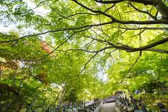 20150517-DS7_9999.jpg (d3_plus) Tags: street sky mountain plant nature japan trekking walking spring scenery shrine bokeh outdoor hiking fine wideangle daily  streetphoto  kanagawa    shintoshrine   buddhisttemple dailyphoto sanctuary   funicular thesedays superwideangle    fineday     holyplace tamron1735   ooyama  a05     tamronspaf1735mmf284dildasphericalif  tamronspaf1735mmf284dildaspherical d700    nikond700 tamronspaf1735mmf284dild tamronspaf1735mmf284  nikonfxshowcase cabelecar mountooyama