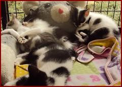 Los bebes (terryisaza) Tags: cariosos cachorros gatos gata cats fotografia felinos photograpy