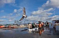 Yes !!! (JOAO DE BARROS) Tags: barros joo seagull fly wings animal bird