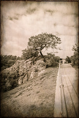 T (B.M.K. Photography) Tags: textured tree rock ballustrade monochrome vintage sky path grass hill