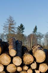 ckuchem-7148 (christine_kuchem) Tags: wald abholzung baum baumstmme bume einschlag fichten holzeinschlag holzwirtschaft waldwirtschaft