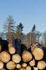ckuchem-7148 (christine_kuchem) Tags: wald abholzung baum baumstämme bäume einschlag fichten holzeinschlag holzwirtschaft waldwirtschaft
