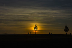 Sundown on Via Regia (pwendeler) Tags: sundown sonnenuntergang himmel sky sun sonne sonynex7 viaregia hohestrasse outdoor landschaft landscape baum tree arbre soleil sol