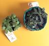tropical (Carol Grilo • FofysFactory®) Tags: vaso maceta cachefofys tropical luizanormey fofysfactory handmade craft estampa pattern brasil cachepo cachepot flowerpot