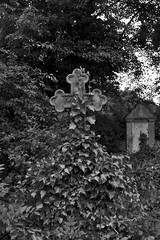 Friedhof Hemmingen 009 (michael.schoof) Tags: friedhof grabmal