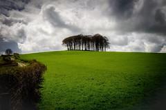 Copse (Robgreen13) Tags: uk devon landscape trees copse clouds