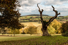Killerton Park and view towards Ashclyst Forest (Keith in Exeter) Tags: killerton park estate dead tree autumn landscape nationaltrust devon england uk grassland fields outdoor