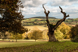 Killerton Park and view towards Ashclyst Forest