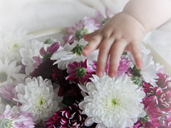 (Astrida Simane) Tags: photography canon closeup beautiful flowers baby