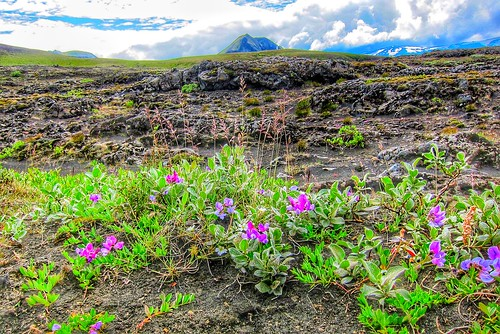 Iceland ~ Landmannalaugar Route ~ Ultramarathon is held on the route each July ~ Tekking Hiking
