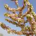 Turmenistan flora
