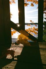 Lit Leaves (Georgie_grrl) Tags: princeedwardcounty cottagechoir friendship music social friends roadtrip pentaxk1000 rikenon12828mm ontario leaves autumn fall lit light colour deck lake sunshine morning