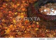 16646417 (finalistJPN) Tags: autumnleaves autumncolors kyoto sanzenintemple zentemple zenspirit worldheritage redleaves nationalgeographic discoverychannel japanguide visitjapan discoverjapan stockphotos availablenow