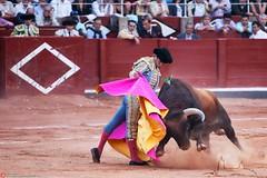 El arte del toreo (Roberto.H) Tags: toro toreo plaza capote cuerno piel