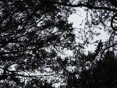 DSCN0327 (apacheizabel) Tags: lago pssaros rvores cu pinhas tronco espelho dgua queroquero rolinhas banco no bosque famlia de galinhas passeio parque centro aeroespacial da aeronutica cta so jos dos campos sp