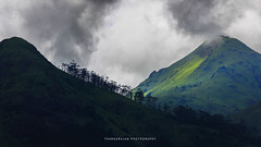 On a cloudy Day (dtrajan) Tags: banasura evening hillstation kerala nature tea beauty bliss bushes clouds colors fog ghats green greens india landscape light matte mist mountains scenic skies south travel trees view wayanad westernghats