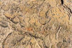 048-RRC160201_47391 (LDELD) Tags: desert rugged dry rocks sand formations nevada redrocknationalconservationarea lasvegas patterns marks abstract nature