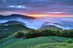 ~~ Tea farm Sunset (Shang-fu Dai) Tags:  taiwan  clouds  nikon d800e sky    landscape formosa sunset  afs1635mmf4   seaofclouds