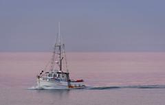 The pink sea (lizcaldwell72) Tags: water fishingboat sky hawkesbay newzealand sunset napier light