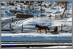 Ukraine 94 Winter_123aa (r_walther) Tags: dzherelo pferdeschlitten schlitten stöckli ukraine winter zakarpattia ukr