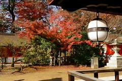 DSC02819 (MrSUIZOU) Tags: 京都 紅葉 北野天満宮 平野神社 十月桜