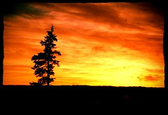 Black Spruce at sunset (Orion 2) Tags: bog peatbog sunset blacksprucetree wetlands wilderness snowshoeinginbackcountry cold dusk winter newfoundlandandlabrador canada