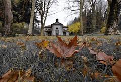 Autumn (Arcieri Saverio) Tags: autunno nikon chiesa foglie yellow giallo calabria inverno italia serrasanbruno selezionecolore color travel