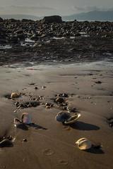 Low Tide.jpg (tiggerpics2010) Tags: elements
