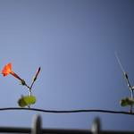 Little Flowers in the Sky thumbnail